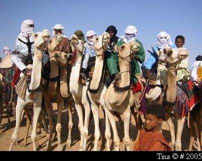 la course  des chameaux